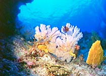 Colourful corals can also be seen around some fringing reefs off the Whitsunday Islands