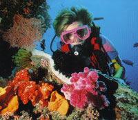 Diving Whitsunday Coral Reefs
